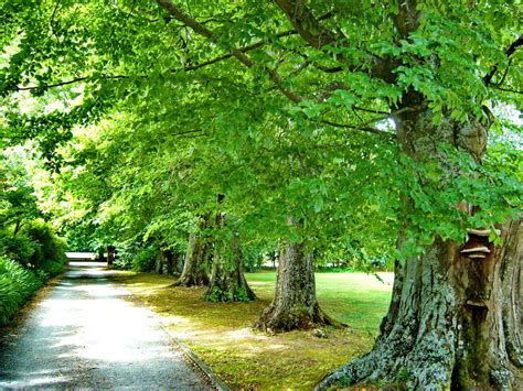 the trees of greytown new zealand