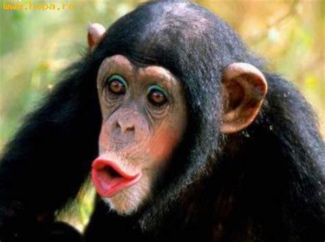 imagenes comicas de monos mono con maquilaje fotos comicas criaturas funpub net
