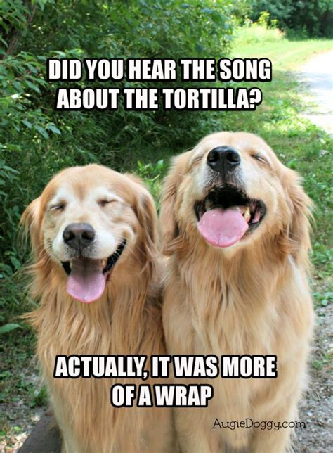 golden retriever humor golden retriever tortilla joke meme postcard jokes and golden