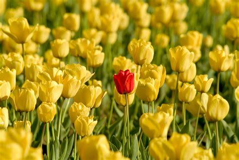 doorschijnende bloemen paycom blog paycom stands out with latest accomplishment