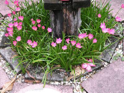 dragonfly garden bloom friday