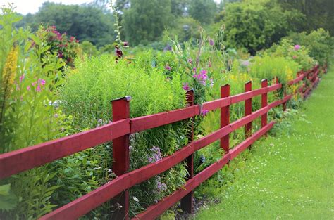 Small Garden Fencing Ideas 7 Small Garden Fencing Ideas For A Gorgeous Backyard Home Of
