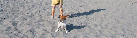Pet Friendly Cottages By The Sea by Friendly Cottages To Rent By The Sea In Cornwall