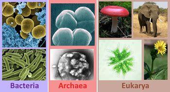 tree of domains bacteria archaea eukarya study