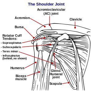 shoulder joint pain bench press can there be fitness class after an injury