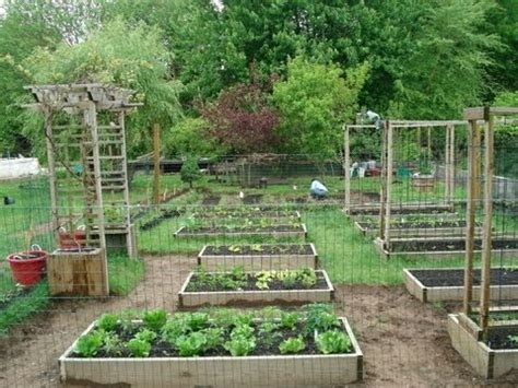 backyard gardeners backyard organic gardening ideas how my dad transformed