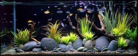 benefits of aquarium fish tanks decoration fish tank best stones fish tank decoration ideas good fish tank