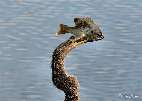 salt water birds birds by dave