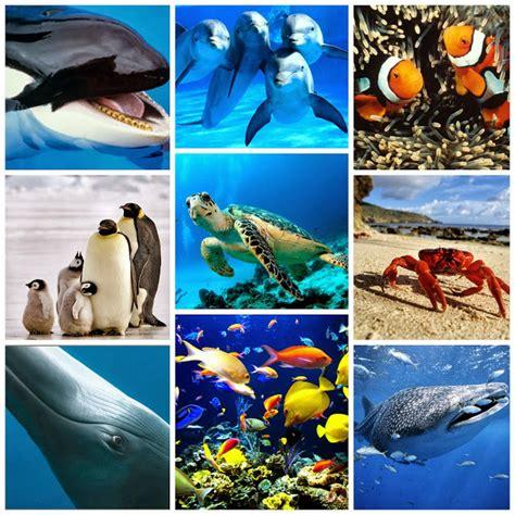 imagenes animales que viven en el agua clasificaci 211 n de los animales animales acuaticos