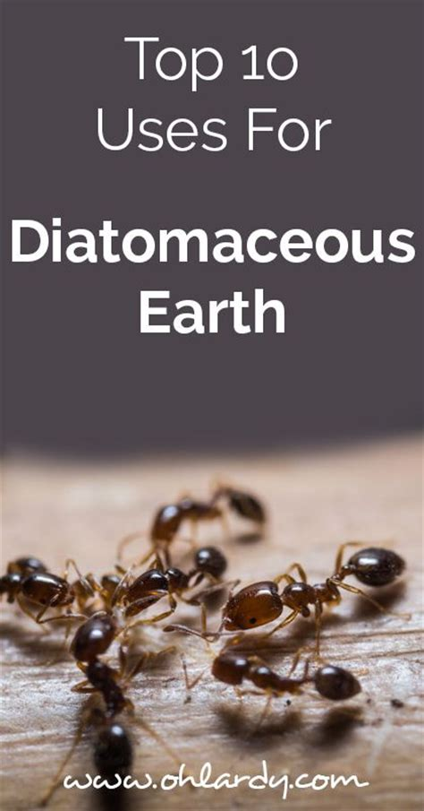 10 Uses For Diatomaceous Earth Diatomaceous Earth Things To Check Out