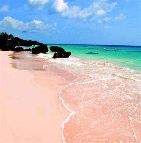 pink sand beach pink sand beach bermuda places i want to go pinterest