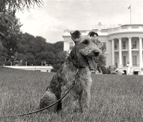 dogs in the white house jfk s welsh terrier charlie presidential pet museum