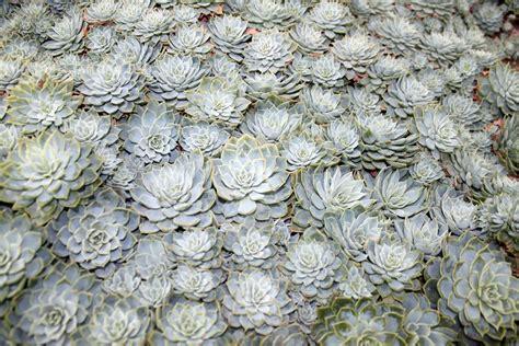 grey cactus plant wallpaper  stock photo public domain pictures