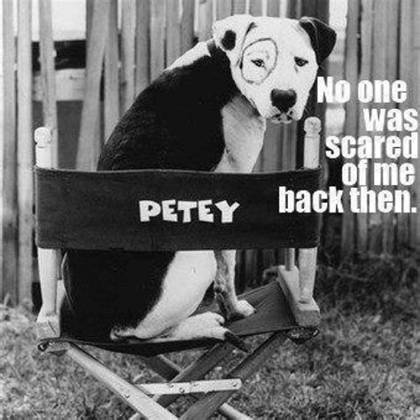 petey the petey the rascals photo oldies tv