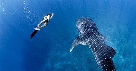 best snorkeling maldives maldives the best snorkeling spots in the world s