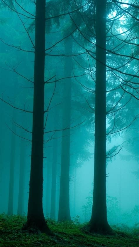 wallpaper iphone 6 forest 640x1136 foggy forest iphone 5 wallpaper