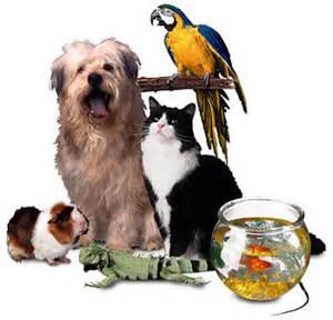 Pet Sitters Pet Sitters Blouberg