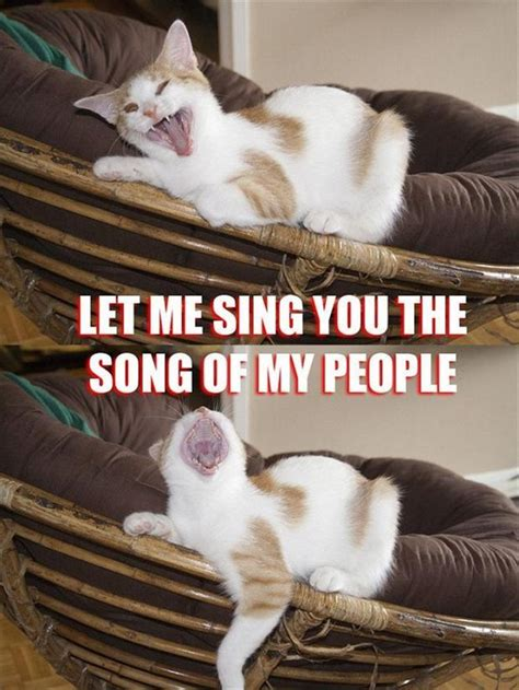 Singing Cat Meme - funny memes let me sing you the song of my people 4