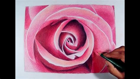 drawings with color 40 beautiful flower drawings and realistic color pencil