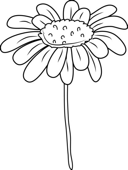clipart flower coloring page daisy flower outline cliparts co