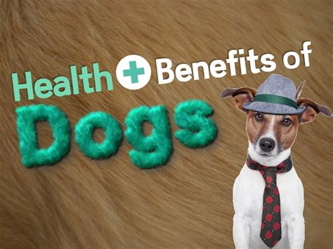 benefits of dogs the health benefits of dogs
