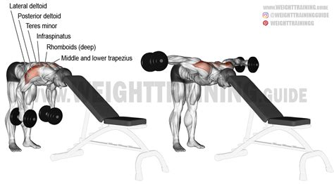bent over lateral raises on incline bench head supported bent over dumbbell lateral raise exercise