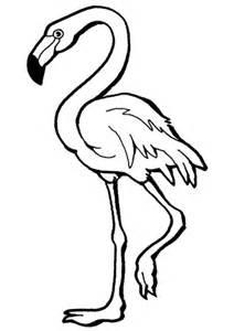 flamingo beim gehen flamingos malvorlagen