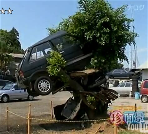 car with tree image junkyard workers enshrine tree that grew to lift a car boing boing