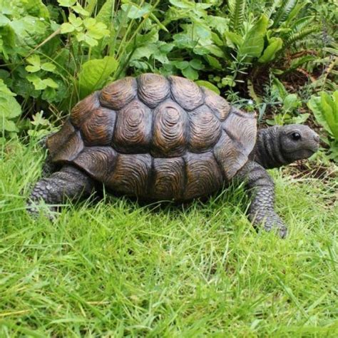 tortoise garden ornament 100 images terry the large