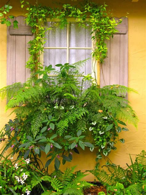 Flowers For Window Boxes Partial Shade - 17 best images about garden plants shade or part shade on pinterest window boxes plants and