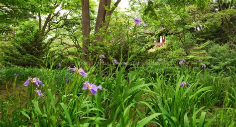 Secret Flower Garden Two From Seoul S Quot Secret Garden Quot Fm Forums