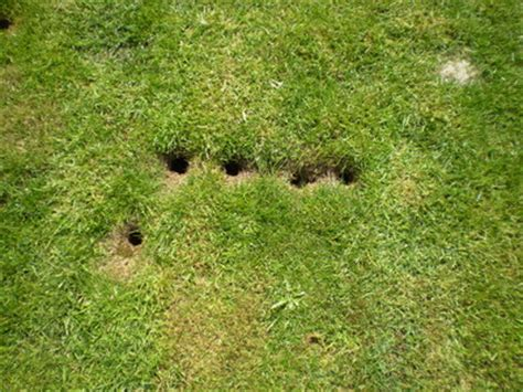 holes in my backyard gallery for gt vole holes in lawn