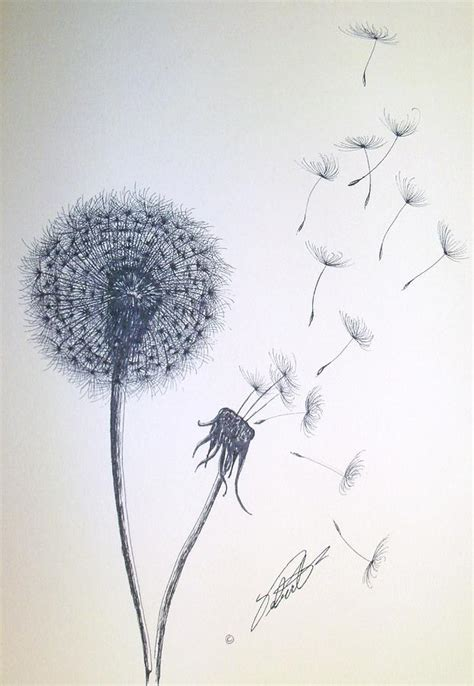 double dandelion drawing by dennis vebert
