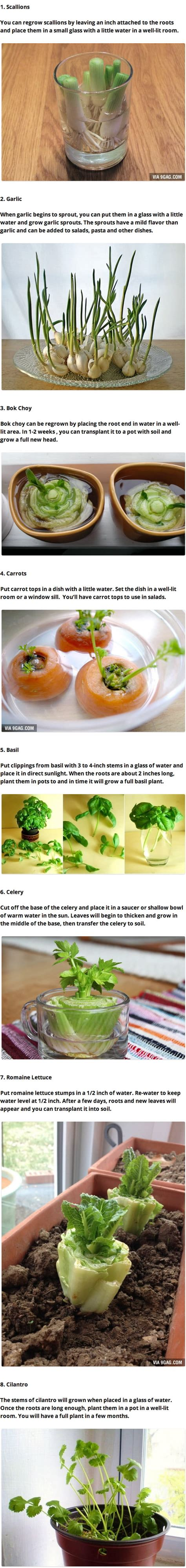 8 vegetables you can regrow 8 vegetables that you can regrow again and again 9gag