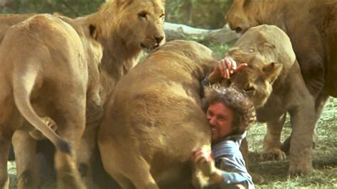 film of lion quot lion fight quot roar movie clip 3 youtube