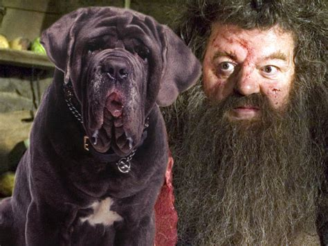 hagrid s dogs name trivia quizzes harry potter playbuzz
