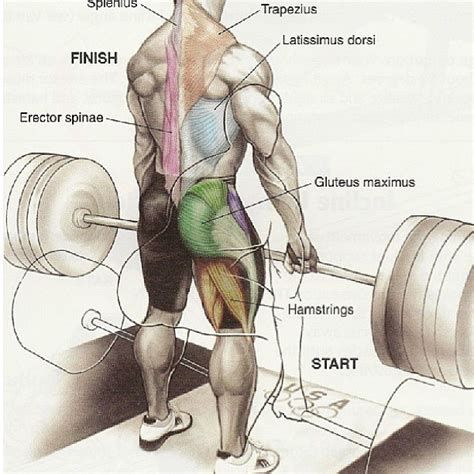 muscles used during bench press testing deadlifts the old man s gym