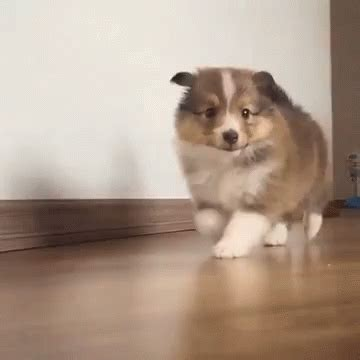 puppy gif 10 puppy gifs you need to see this finals week