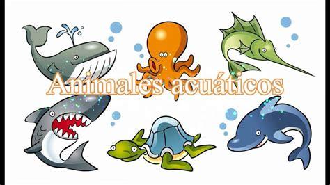 imagenes animales que viven en el agua los animales acu 225 ticos video para ni 241 os en espa 241 ol youtube