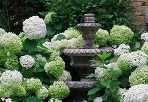 the graceful gardener 187 glorious hydrangeas in my garden