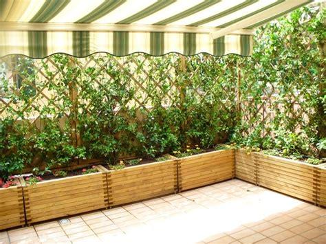 siepe terrazzo siepi da mettere in terrazzo siepi siepi da balcone