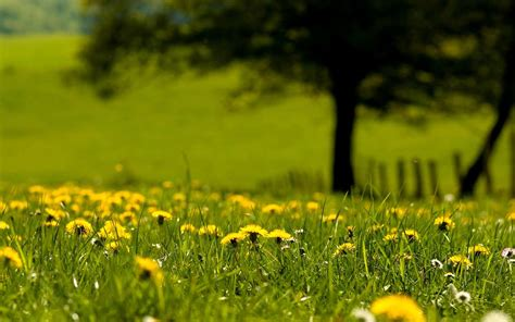 free wallpaper early spring 22 spring nature wallpapers backgrounds images