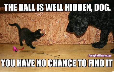 Funny Dog And Cat Memes - dog and cat memes funny