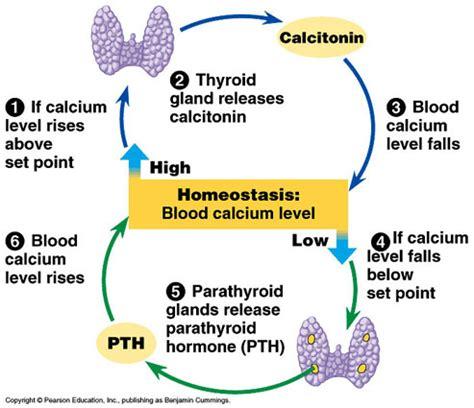 hormone, parathyroid. causes, symptoms, treatment hormone
