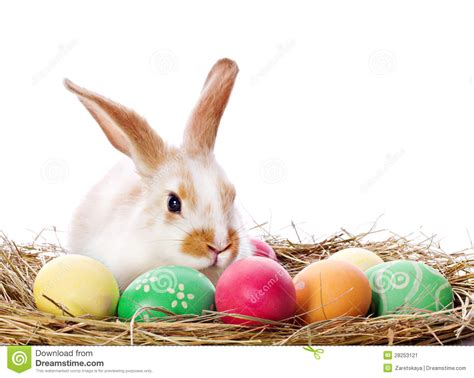 bunny and easter bunny and colored eggs stock image image 28253121