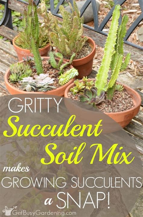 Soil Mix For Outdoor In Ground Succulents - 17 melhores imagens sobre garden succulents no