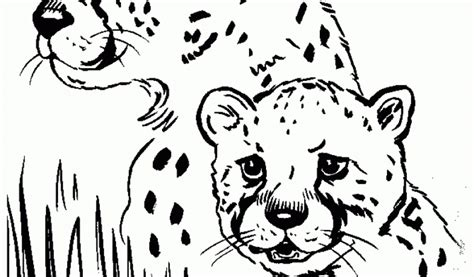 cute cheetah coloring page get this cute baby cheetah coloring pages m57c2