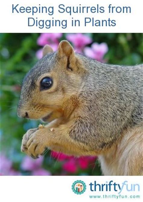 squirrel plants and plant containers on pinterest