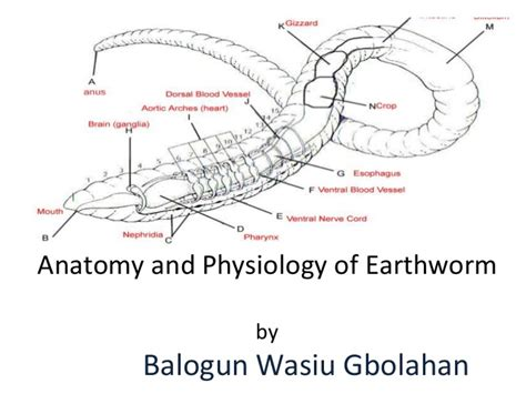 diagram of earthworm with label earthworm presentation