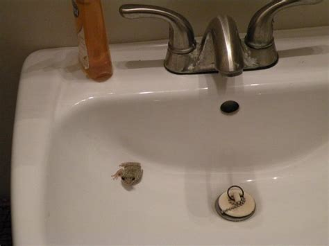 our bathroom sink frog friend picture of seascape inn